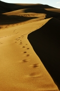 Walking along the dune crests at sunset.