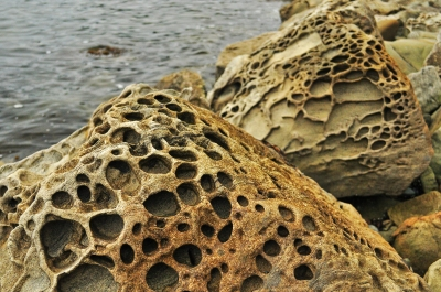 Honeycomb weathering in sandstone at Teddy Bear Cove, WA