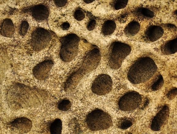 Honeycomb6