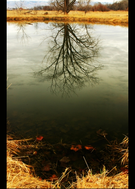 Pond_Reflection