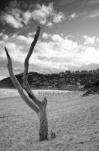 St. Clair Beach, Dunedin