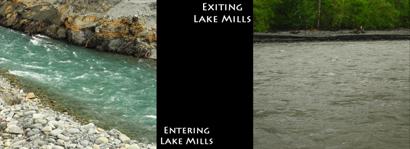 The color change in the Elwah River as it picks up sediment flowing into the former Lake MIlls