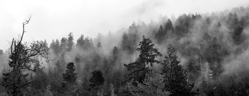 Fog cloaks trees in the Elwah Valley