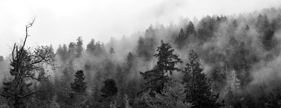 Early morning fog, Olympic National Park, Washington