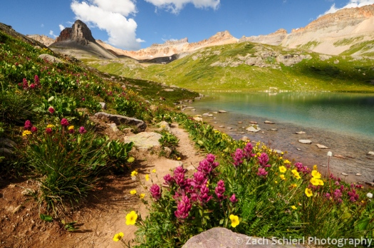 Alpine wildflowers, Ice Lake, San Juan Mountains