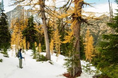 Okanogan-Wenatchee National Forest