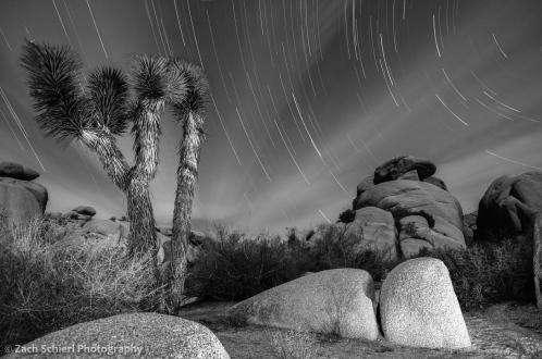 Star Trails over Joshua Tree National Park