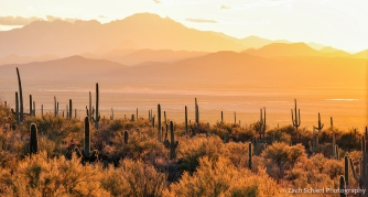 Sunset from Saguaro National Park