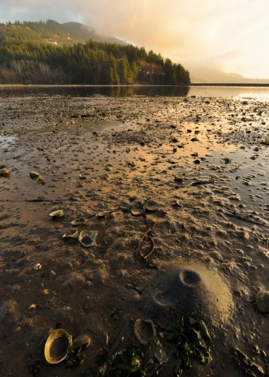 Low tide critters at Chuckanut Bay