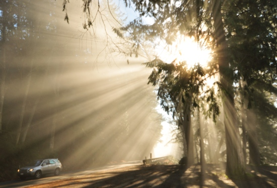 Sunlight streams through the fog along Chuckanut Drive