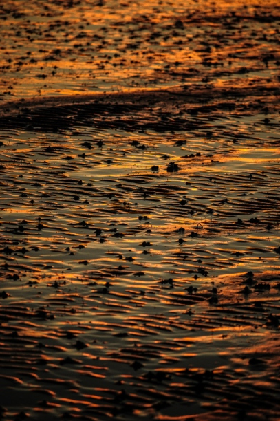 Ripples in the sand catch the last light of Sunset at Padilla Bay