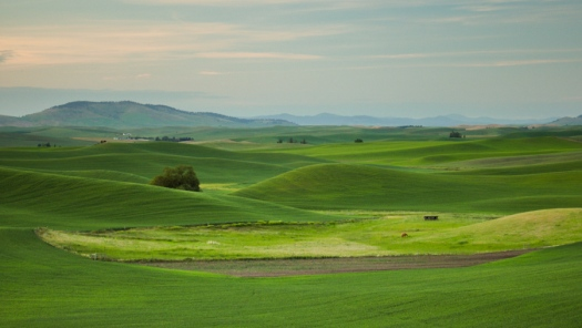 Palouse Hills Sunset