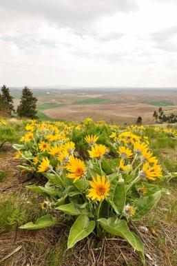 Kamiak Butte Flowers