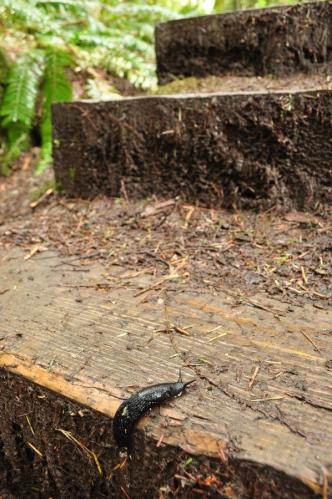 Slug Climbing Stairs