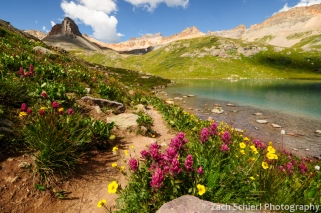 Wildflowers at Ice Lake