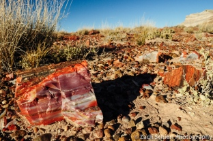 Brilliantly colored petrified wood fragment