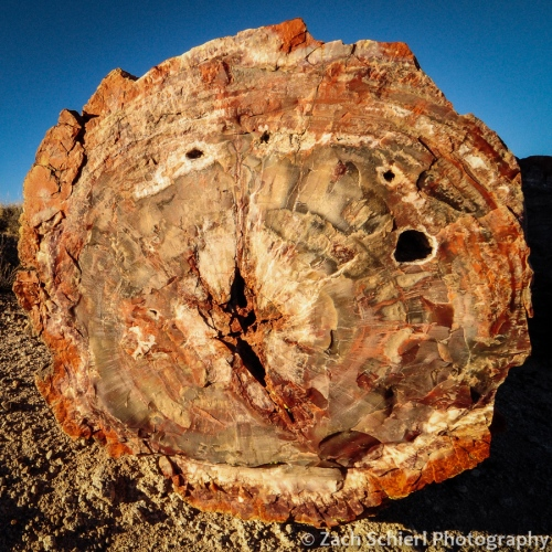 Close-up of log of petrified wood