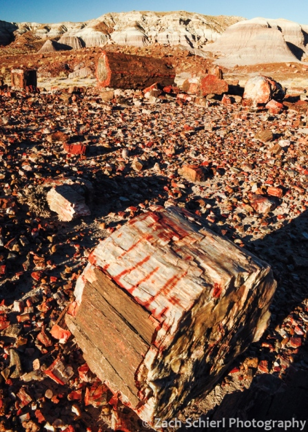 Petrified wood in the Jasper Forest
