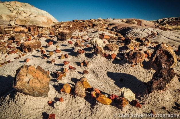 Petrified wood and quartz on pedestals
