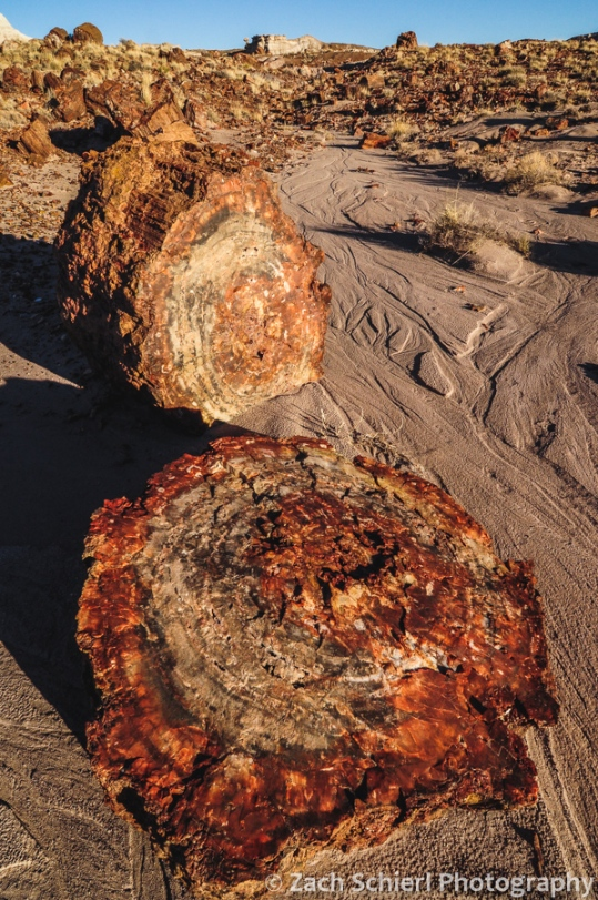 Petrified logs in a small wash