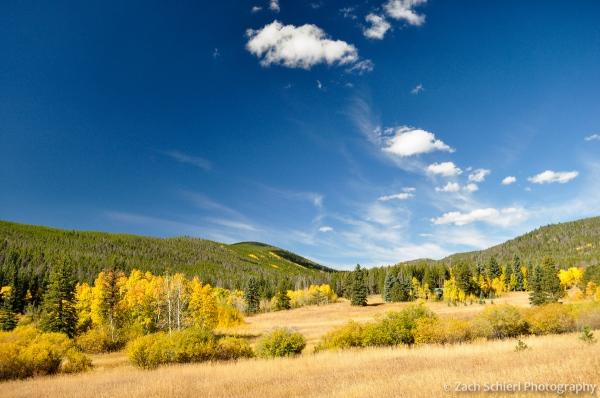 Golden Aspens near Pennock Pass, Colorado