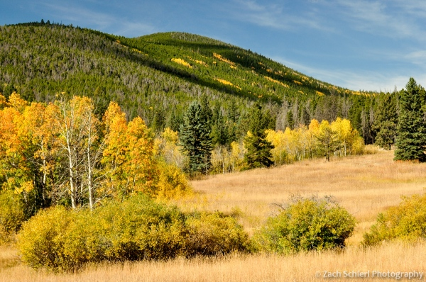 Golden aspens near Pennock Pass, Colorado