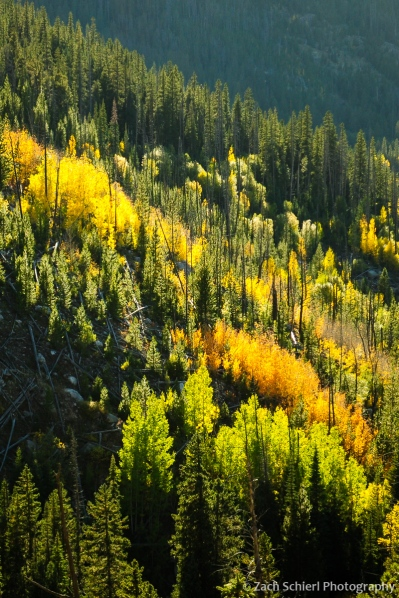 Red, yellow, and green aspens