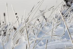 Ice accumulation on dry grass blades