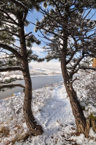 Snowy trail at trees at Horsetooth Reservoir