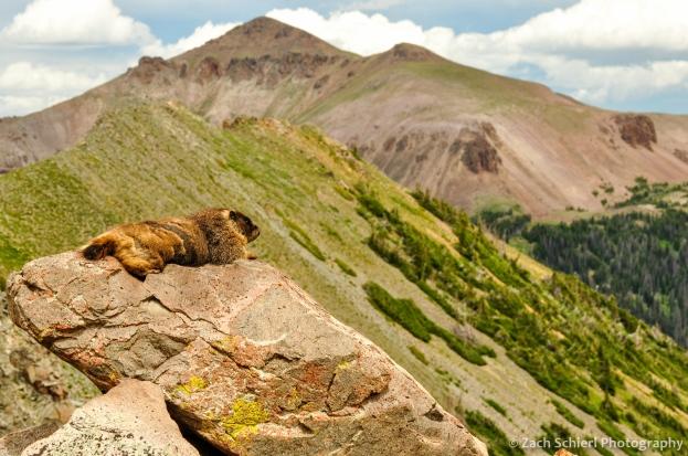 A marmot enjoys the view in the Never Summer Mountains, Colorado
