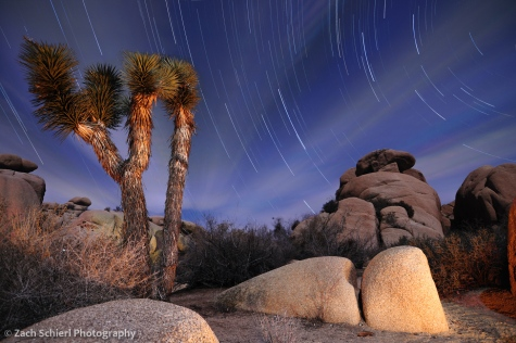 Joshua Tree and Star Trails