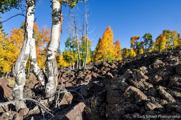 Colorful aspens in lava flow, Markagunt Plateau, UT