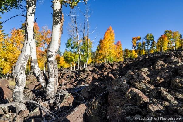 Colorful aspens in lava flow, Markagunt Plateau, UT