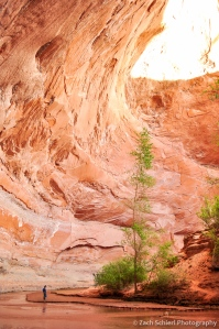 Large alcove with hiker for scale, Coyote Gulch, Utah