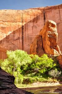 Rocks, trees, and desert varnish, Coyote Gulch, Utah