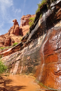 Spring and rock formations, Coyote Gulch, Utah