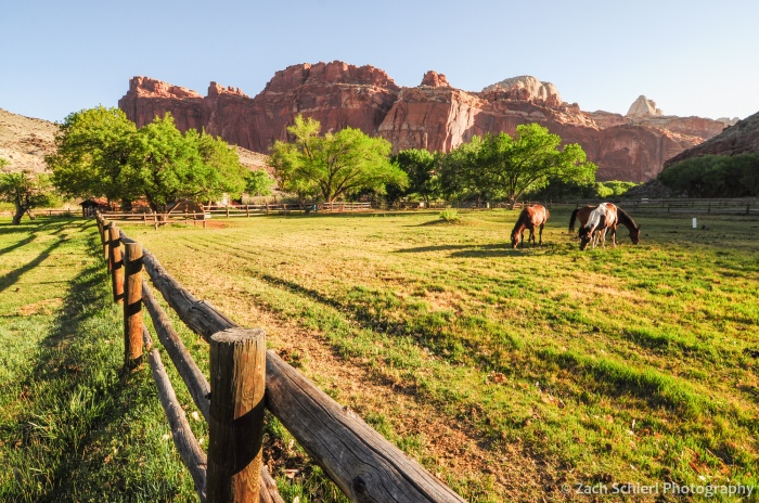Early morning in the Fruita orchards and pastures