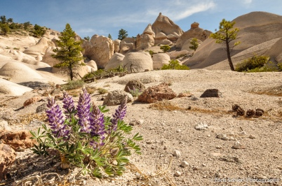 Purple flowers grow in a sandy wash with rock formations in the background