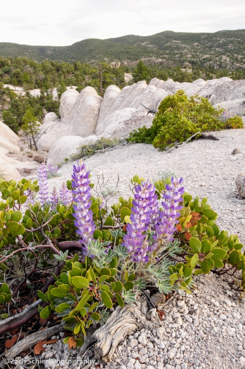 Purple flowers growing from within a green plant and white rocks in the background
