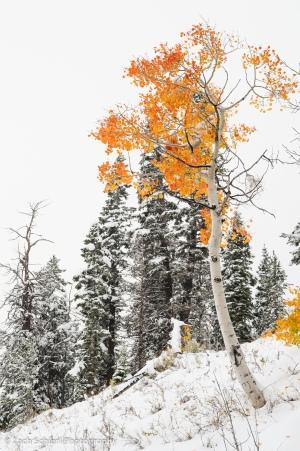 Markagunt Plateau, Utah