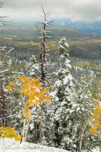 Colorful aspens and snow covered conifers overlooking the Kolob Terrace