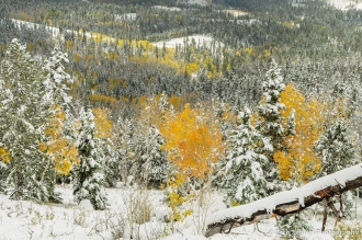 Colorful aspens among snow-covered firs on the south slopes of the Markagunt Plateau, looking south toward Kolob Terrace and Zion National Park.