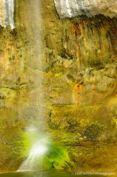 Multicolored mosses and other planets cling to the rock beneath a waterfall.