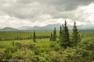 Gray clouds hover over a landscape of scattered trees and shrubs