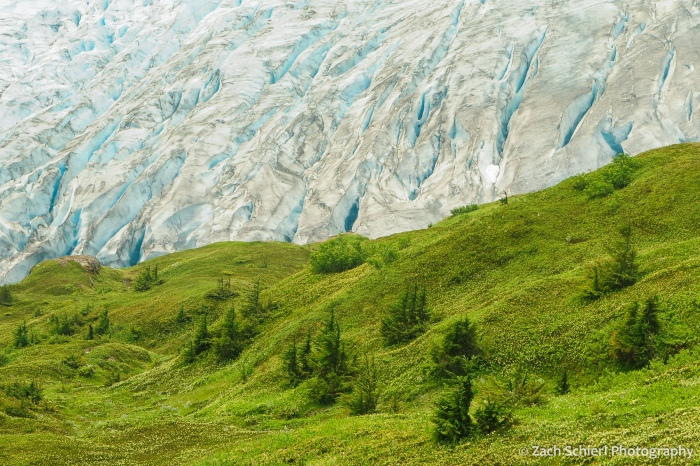 White and blue glacial ice contrasts with lush green carpet of vegetation