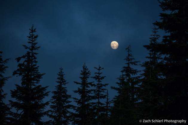 A nearly full moon rises over a forest of trees