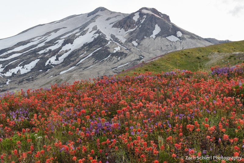 A tall volcanic peak dotted with snow rises behind a field of bright red wildflowers