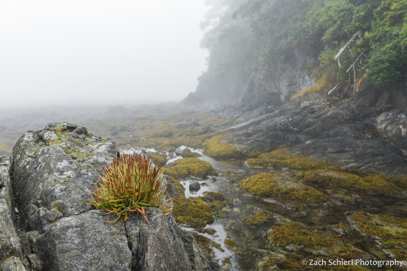 Small plants grow along a rocky coastline