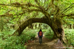 Hoh Rain Forest, Olympic National Park, WA