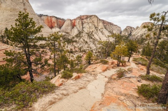A trail winds through pine trees and vast expanses of white sandstone